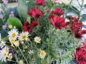 Bergen Market flowers