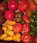 organic field tomatoes