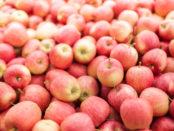 Lots of fresh Gala apples.